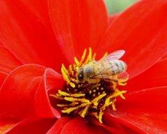 Праздник мёда