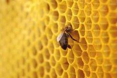 Приготовление мёда