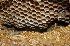 Дары пасеки - мёд и  продукты пчеловодства