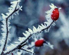 Зимние контрасты