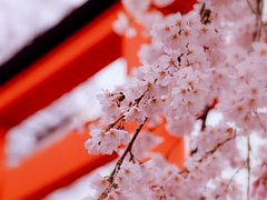 Весна прекрасна - будьте красивы и Вы!