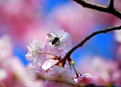Пчелиный элексир для кожи