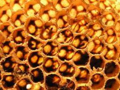 Ароматная аптечка пчелиной семьи