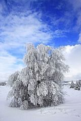 Зиму любят сильные