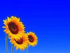 О пользе солнца и вреде загара