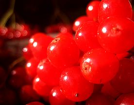 Снежина ягода-калина