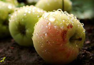 О яблоках, клетчатке и растительных волокнах