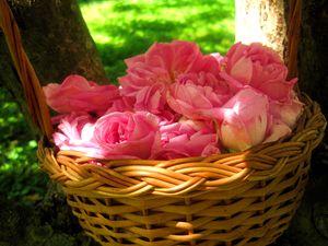 Розовый чай