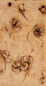 Цветы да Винчи