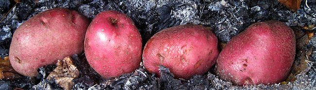 Рецепты полезного картофеля инков