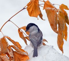 Кормите зимой птиц