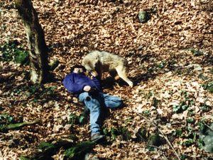 Память у волка