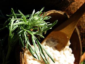 Полынь-трава в рецепт Кокосовый дахи от Zima