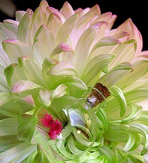 Ароматы для букета из сухоцветов